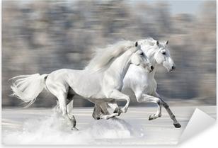 Two white horses in winter run gallop Pixerstick Sticker