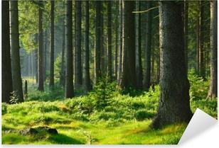 Sticker Pixerstick Unberührter naturnaher fichtenwald im warmen licht der morgensonne