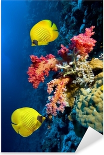 Underwater image of coral reef and Masked Butterfly Fish Pixerstick Sticker