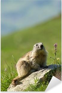 Sticker Pixerstick Une marmotte mignon dans les Alpes