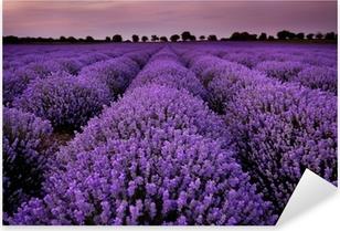 Pixerstick Sticker Velden van lavendel bij zonsondergang