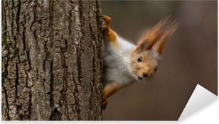 Pixerstick Sticker Verrast eekhoorn, gluren achter een boom