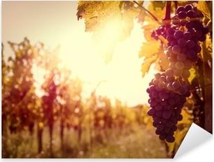 Sticker Pixerstick Vignoble au coucher du soleil dans la récolte d'automne.