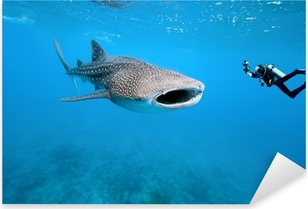 Pixerstick Sticker Walvishaai en onderwaterfotograaf