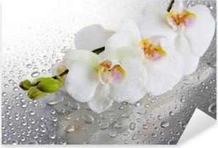 white beautiful orchids with drops Pixerstick Sticker