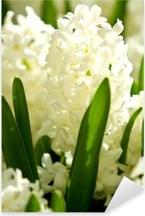 White hyacinths Pixerstick Sticker
