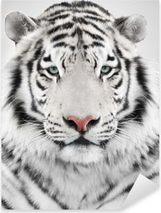 White tiger Pixerstick Sticker