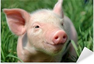 Young pig on a green grass Pixerstick Sticker