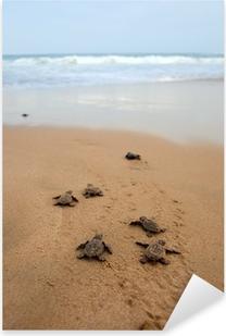 Pixerstick Sticker Zeeschildpad opkomst
