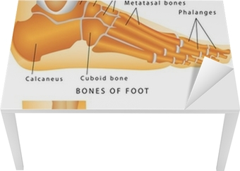Bones of the Foot and Ankle Table & Desk Veneer