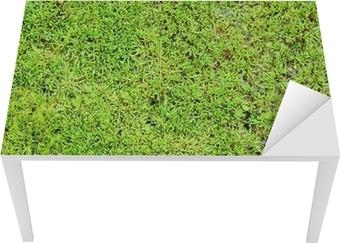 Green moss background Table & Desk Veneer