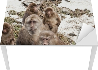 monkeys Table & Desk Veneer