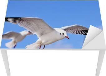 seagulls Table & Desk Veneer
