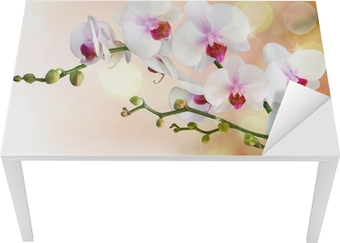 white orchids on water with drop Table & Desk Veneer