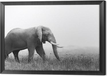 tableau en cadre elephant en noir et blanc - Cadre Elephant