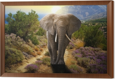tableau en cadre lphant marchant sur la route au coucher du soleil - Cadre Elephant