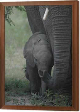 tableau en cadre elephant un elephanteau - Cadre Elephant