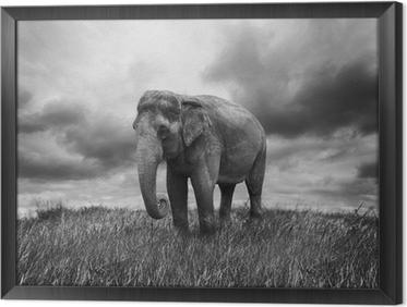 tableau en cadre lphant - Cadre Elephant