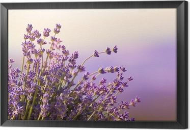 Tableau en Cadre Fleurs de lavande fleurissent l'heure d'été