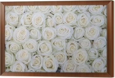 Tableau en Cadre Groupe de roses blanches après une averse de pluie