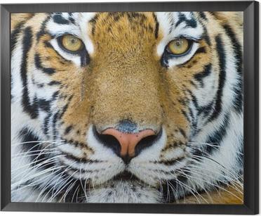 tableaux sur toile tigres pixers nous vivons pour changer. Black Bedroom Furniture Sets. Home Design Ideas