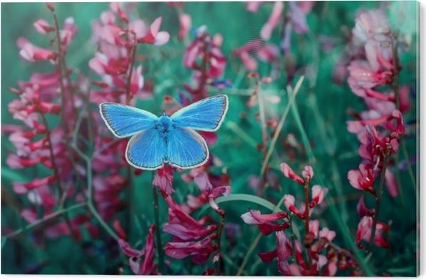 Tableau Plexiglas Papillon -