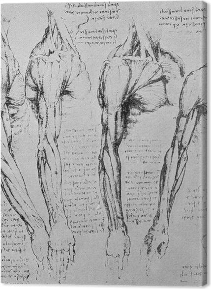 Tableaux premium Léonard de Vinci - Étude des bras - Reproductions
