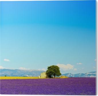 Tableau PVC Fleurs de lavande floraison terrain, maison et l'arbre. Provence, Franc
