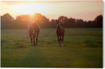 Tableau PVC Mère cheval avec poulain sur une terre ferme au coucher du soleil. geesteren. acheter