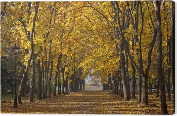 Tableau sur toile Allée de jardin avec des arbres d\'automne ...