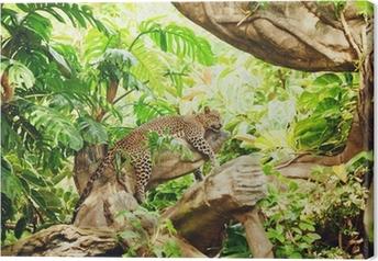 Tableau sur toile Allongé (sommeil) Leopard sur une branche d'arbre