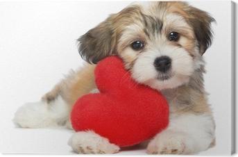 Tableau sur toile Amoureux Valentine Havanais chiot avec un coeur rouge
