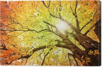 Tableau sur toile Arbre d'automne
