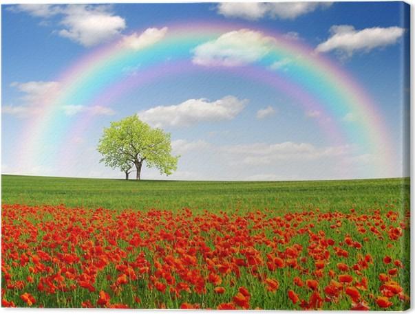tableau sur toile arc en ciel au dessus du paysage de printemps avec coquelicot rouge pixers. Black Bedroom Furniture Sets. Home Design Ideas