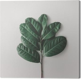 Tableau sur toile Arrangement minimal créatif de feuilles sur fond blanc clair. pose à plat. concept de nature.