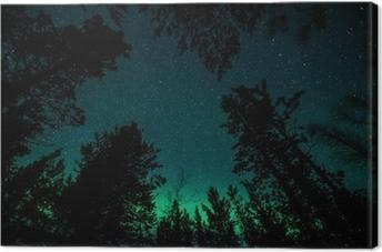 Tableau sur toile Aurores boréales au-dessus des arbres en Norvège