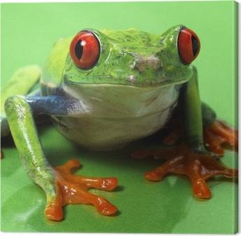 Tableau sur toile Aux yeux rouges rainette macro isolé exotique grenouille brick animal curieux