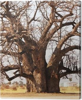 Tableau sur toile Baobab