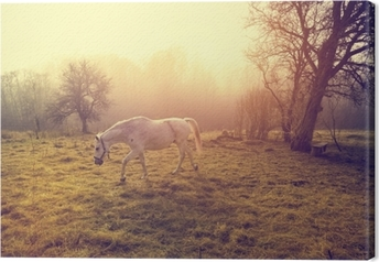 Tableau sur toile Beau cheval blanc