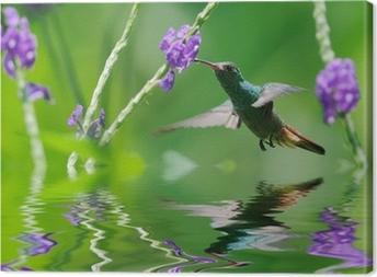 Tableau sur toile Beau colibri dans la réflexion