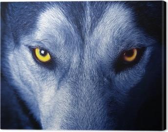 Tableau sur toile Beaux yeux d'un loup sauvage.
