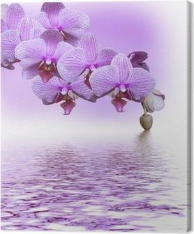 Tableau sur toile Belle orchidée lilas