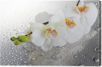 Tableau sur toile Belles orchidées blanches avec des gouttes