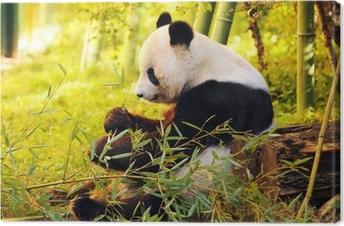 Tableau sur toile Big Panda assis sur le sol de la forêt mangeant le bambou