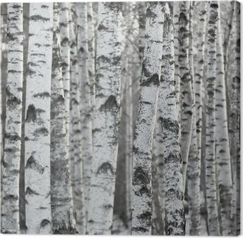 Tableau sur toile Birch Tree Forest Winter Background