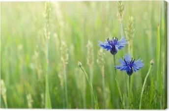 Tableau sur toile Bleuets dans un champ