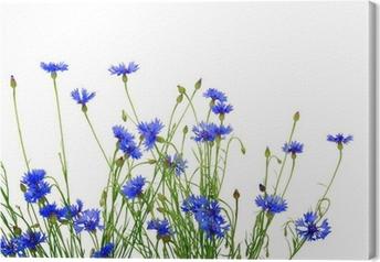 Tableau sur toile Bleuets