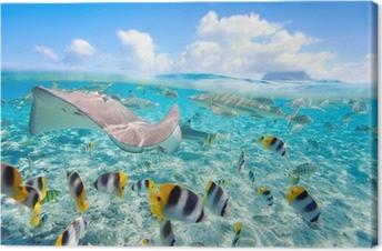 Tableau sur toile Bora Bora sous-marine