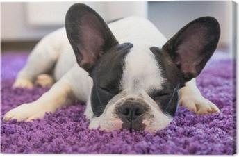 Tableau sur toile Bouledogue français de dormir sur le tapis