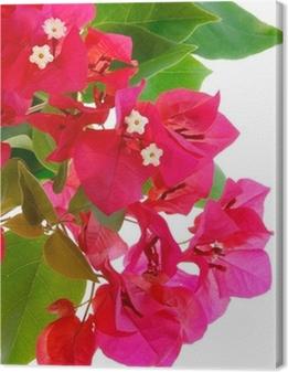Tableau sur toile Branche de bougainvilliers en fleurs